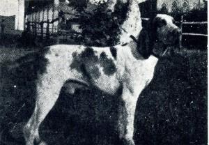 Giulio della Portalupa