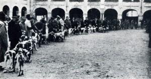 Raduno di bracchi a Lodi nel secondo dopoguerra