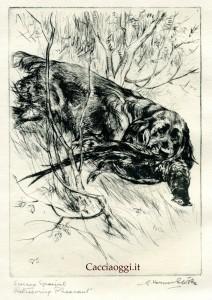 "Fig 5- ""Sussex spaniel retrieving pheasant"""