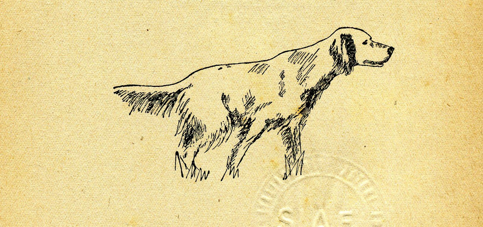 Cinotecnica la ferma in bianco pagina 4 di 4 caccia oggi for Cani che non vogliono fare il bagno